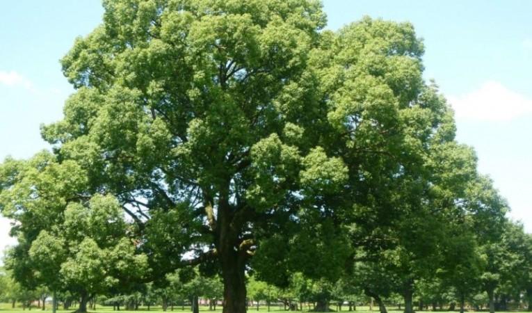 家系図は英語でFamily Tree。海外の家系図事情を探ってみた。
